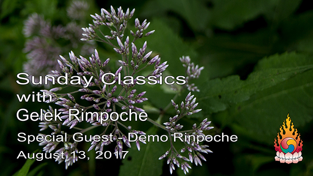 Classic Sundays – Guest Demo Rinpoche 03