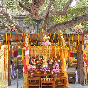 Jewel Heart Pilgrimage to Bodhgaya